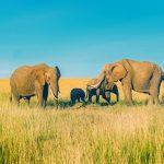 راهنماهای فیل از نپال