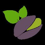 بادام سامان – فروش بادام – بهترین خشکبار
